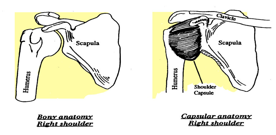 Shoulder Instability | Neill Thompson